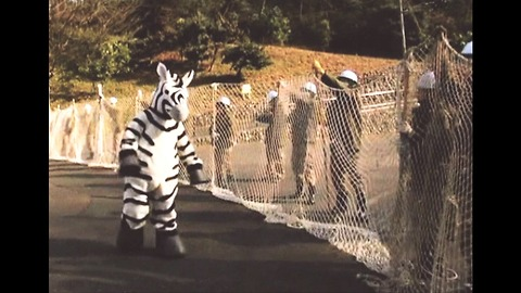 Fake Zebra Escapes From Zoo