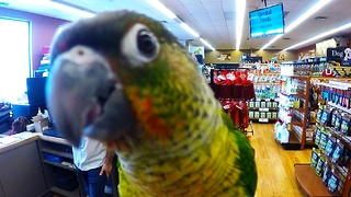 Curious baby parrot loves being on camera - Video