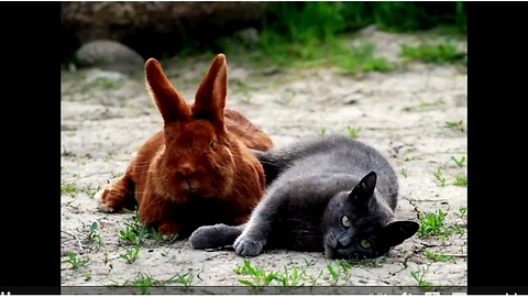 Cat and rabbit are truly best friends