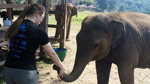 Rescued baby elephant interacts with lucky girl
