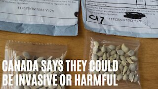 Canadians Are Getting Unsolicited Seeds In The Mail & The Government Says Don't Plant Them