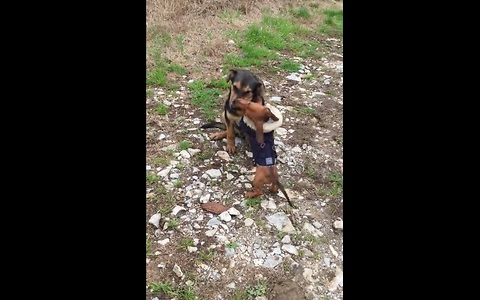 Patient dog puts up with overly attached puppy