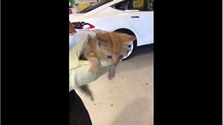 Tesla Service Center rescues trapped kitten in car - Video