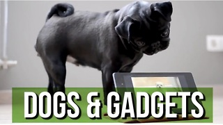 This Hilarious Dogs & Gadgets Compilation Will Brighten Your Day! - Video