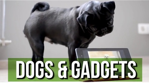 This Hilarious Dogs & Gadgets Compilation Will Brighten Your Day!
