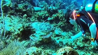 Scuba Diver Has Incredible Moment With Two Critically Endangered Sea Turtles  - Video