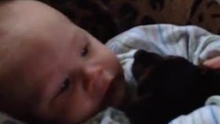 Loving puppy adorably cuddles baby - Video