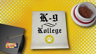 K9 Kollege: Island Animal Hospital - Video