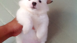 This little puppy so adorable  - Video