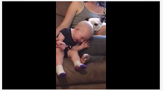 One-year-old loves kisses from Boston Terrier - Video