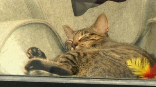 French Feline Cafe - Video