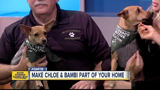 Dec. 31 Rescues in Action: Chloe and Bambi needs new home for new year