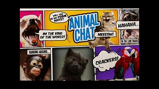 Animal Chat - Episode One - Video