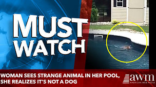 Woman Sees Strange Animal In Her Pool, She Realizes It's Not A Dog - Video
