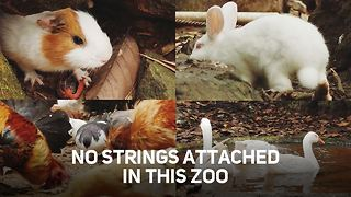 As close to Zen as a Zoo can be - Video