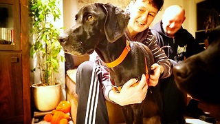 DOG ABANDONED BECAUSE HE IS BLACK jumps on a plane and leaves the country *BLACK DOG SYNDROME*  - Video
