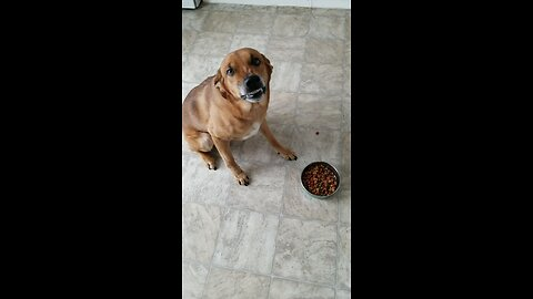 Dog hilariously frowns in disgust at his breakfast