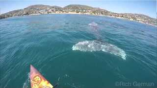 Curious Whales Swim Right Beside Paddleboarders - Video