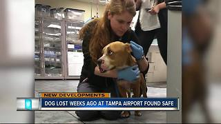'Brady' the missing TIA dog has been found alive and well, recovering at animal hospital - Video