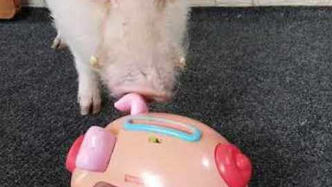 Moritz the Pig Saves His Pennies for a Rainy Day