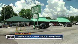 Dirty Dining: Alessi Bakery's rodent infestation - Video