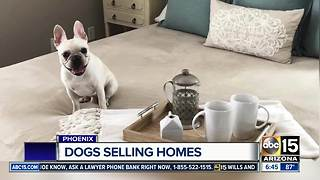 Valley realtor using dogs to help sell homes