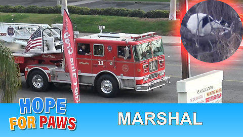 Hope For Paws and the Long Beach Fire Department working together to save Marshal!