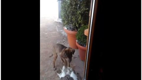 Stray dog & cat keep each other company