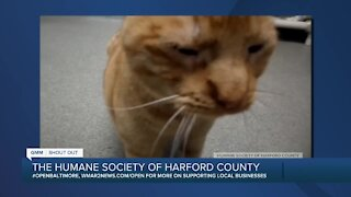 The Humane Society of Harford County