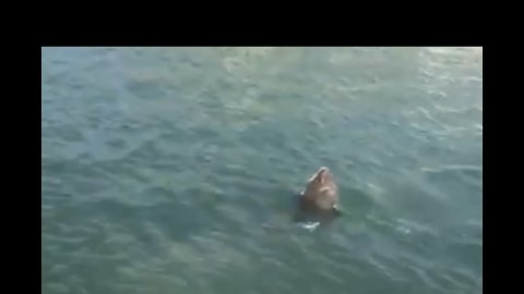 'Shark Sighting' Sparks Fear in North Carolina Waters