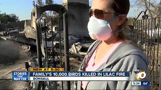 Family's 10,000 birds killed in Lilac Fire - Video