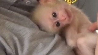 Infant Stump-Tailed Macaque Receives Much Needed TLC From Animal Rescue