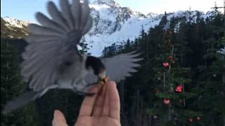 Incredible slow-motion of a bird taking food from a hand