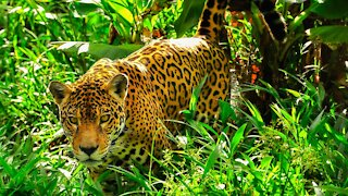 Land-Grabbers And Wildcat Ranchers Are Turning The Amazon To Ash