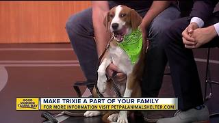 Pet of the week: Trixie is an energetic 6-month-old hound mix who needs a family of her own