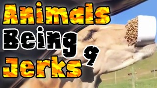 Animals Being Jerks #9 - Video
