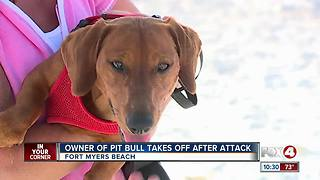 Owner of Pit Bull Takes off After Puppy Attack - Video