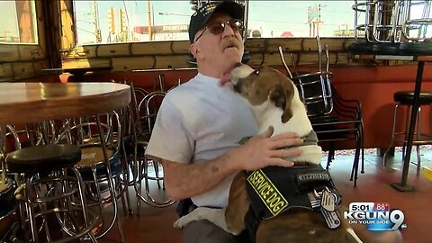 Veterans supported by K9's