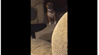 Check Out This Talented Dog Singing Along To A Piano