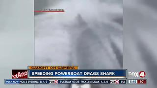 Wildlife officials investigate video of boat dragging shark - Video