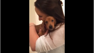 Girlfriend bursts into tears after new puppy surprise - Video