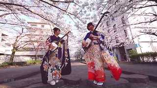 Japanese Duo Play Shamisen Under the Cherry Blossoms - Video