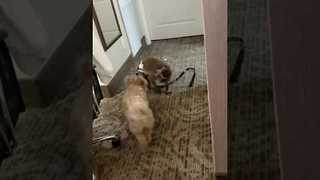 A Dog and Monkey Had a Play Date - Video