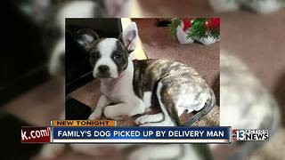 Las Vegas woman says dog was taken by medical delivery man - Video