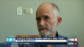 Could cold snap kill off red tide blooms? - Video
