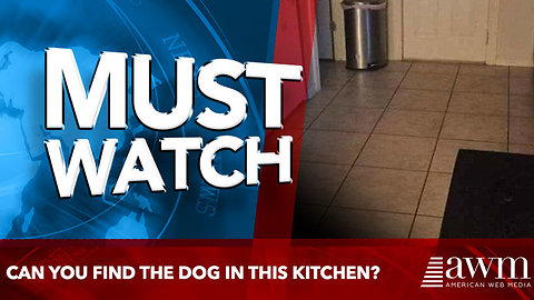 Can you find the dog in this kitchen?