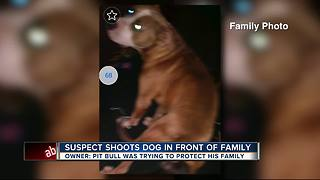 Stolen vehicle suspects shoot dog while trying to evade police - Video