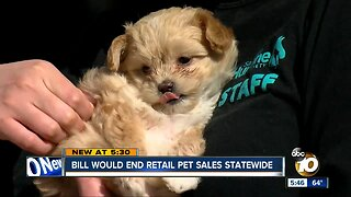 Bill would end retail pet sales statewide