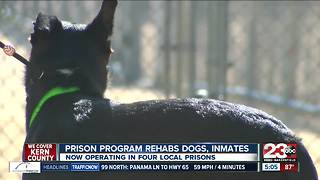 Pawsitive Change program rehabs dogs, inmates