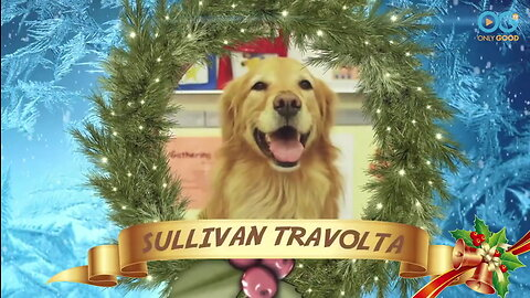 Sullivan The Therapy Dog Helps Make A Christmas Movie - Sullivan's Travels